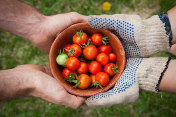 Share tomatos